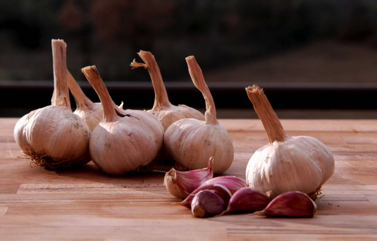 SULMONA-RED-GARLIC